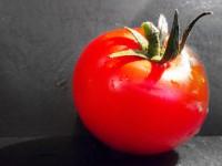 Penne in Tomaten-Ricotta-Sauce